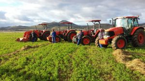 M-Series Kubota Tractors on Copeman's farm