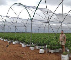 Francois Kriel, operasionele bestuurder by Madikwe Berry, kon nie anders as om Kubotas te kies vir hierdie delikate boerdery nie.