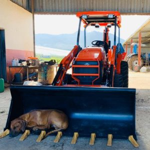 Kubota L45 loved by a dog